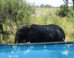 <a href= 'https://www.reves-afrique.ch/safari-botswana' target='_blank' class='white'>Botswana</a>, novembre 2014